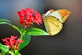 Обои Бабочка на цветке: Цветок, Бабочка, Бабочки