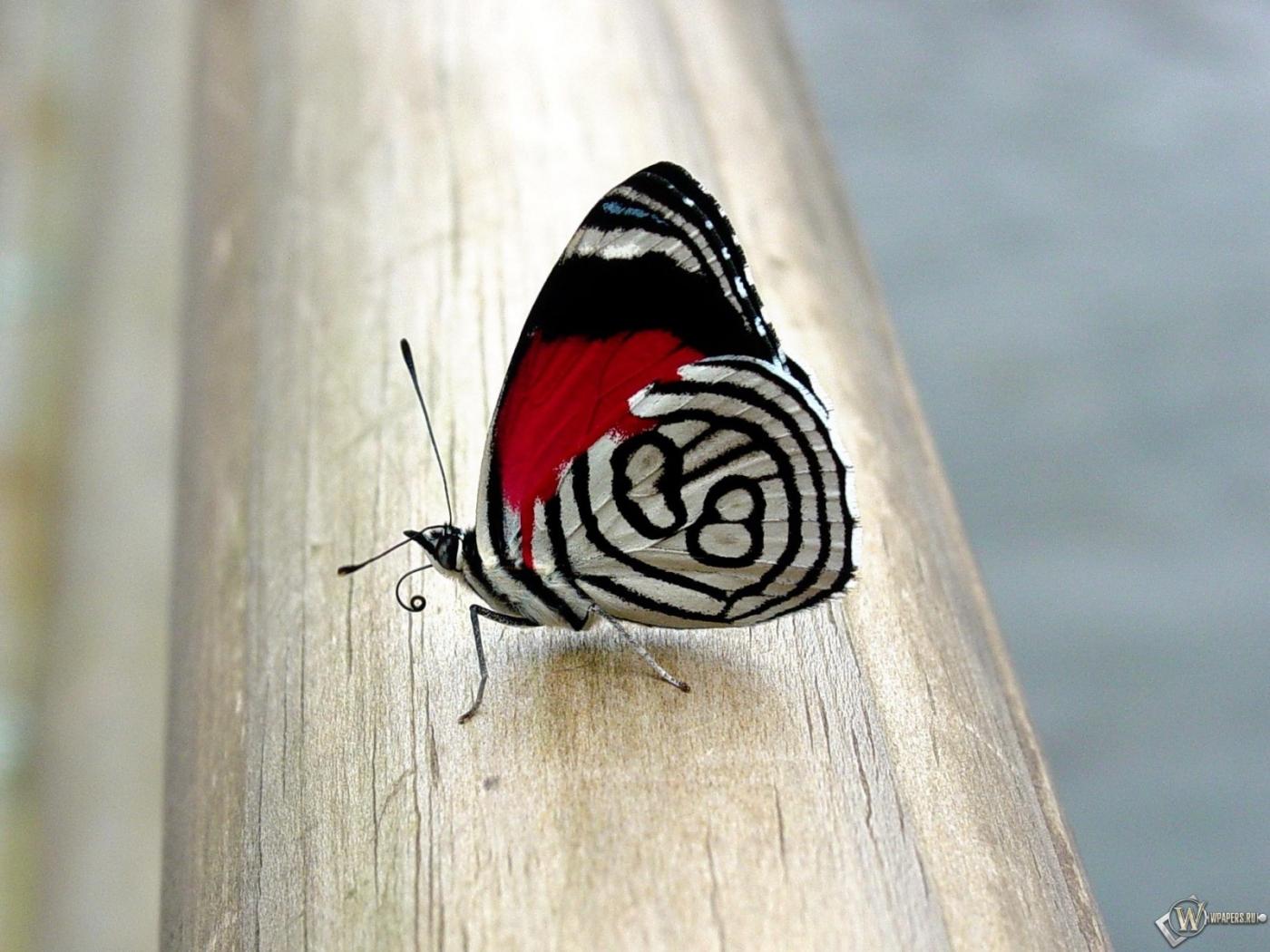 Прекрасная бабочка 1400x1050