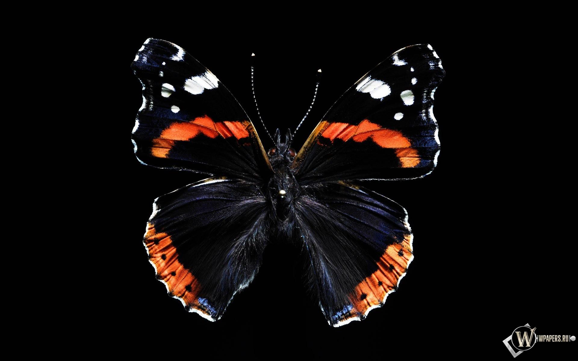Бабочка 1920x1200