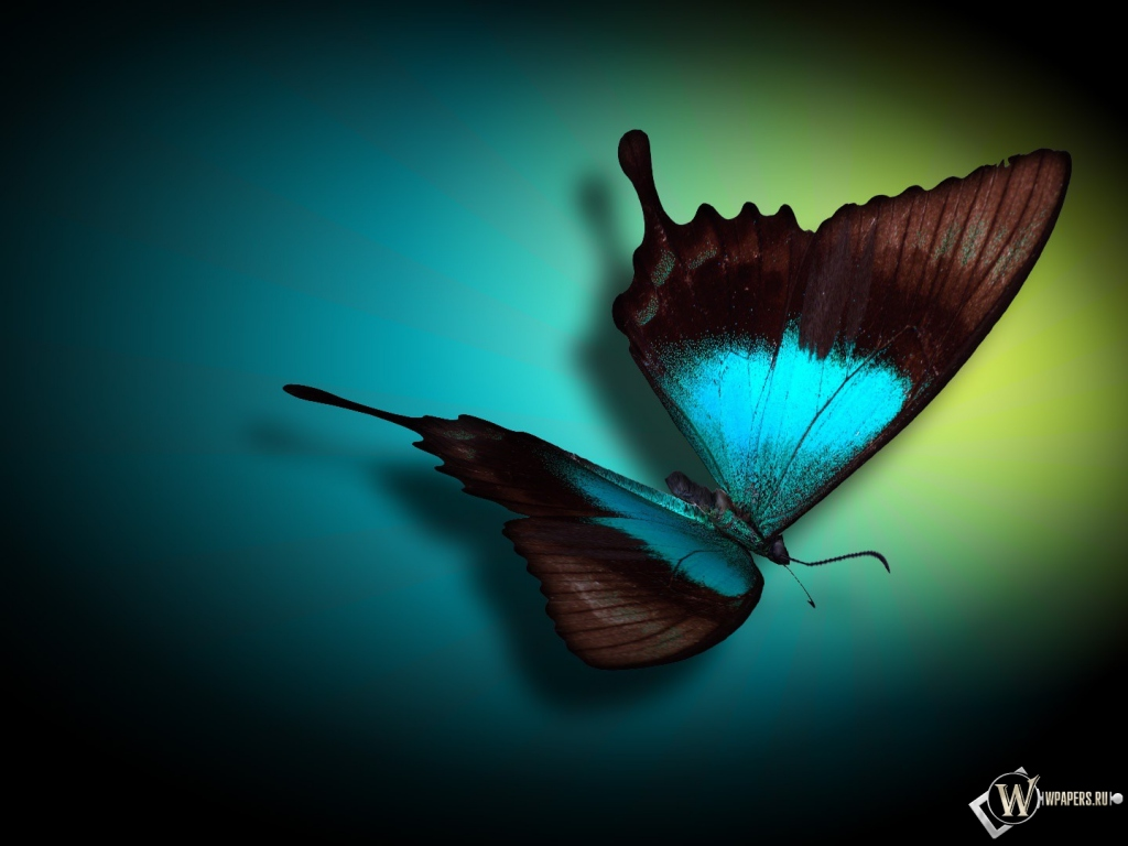 Бабочка 1024x768