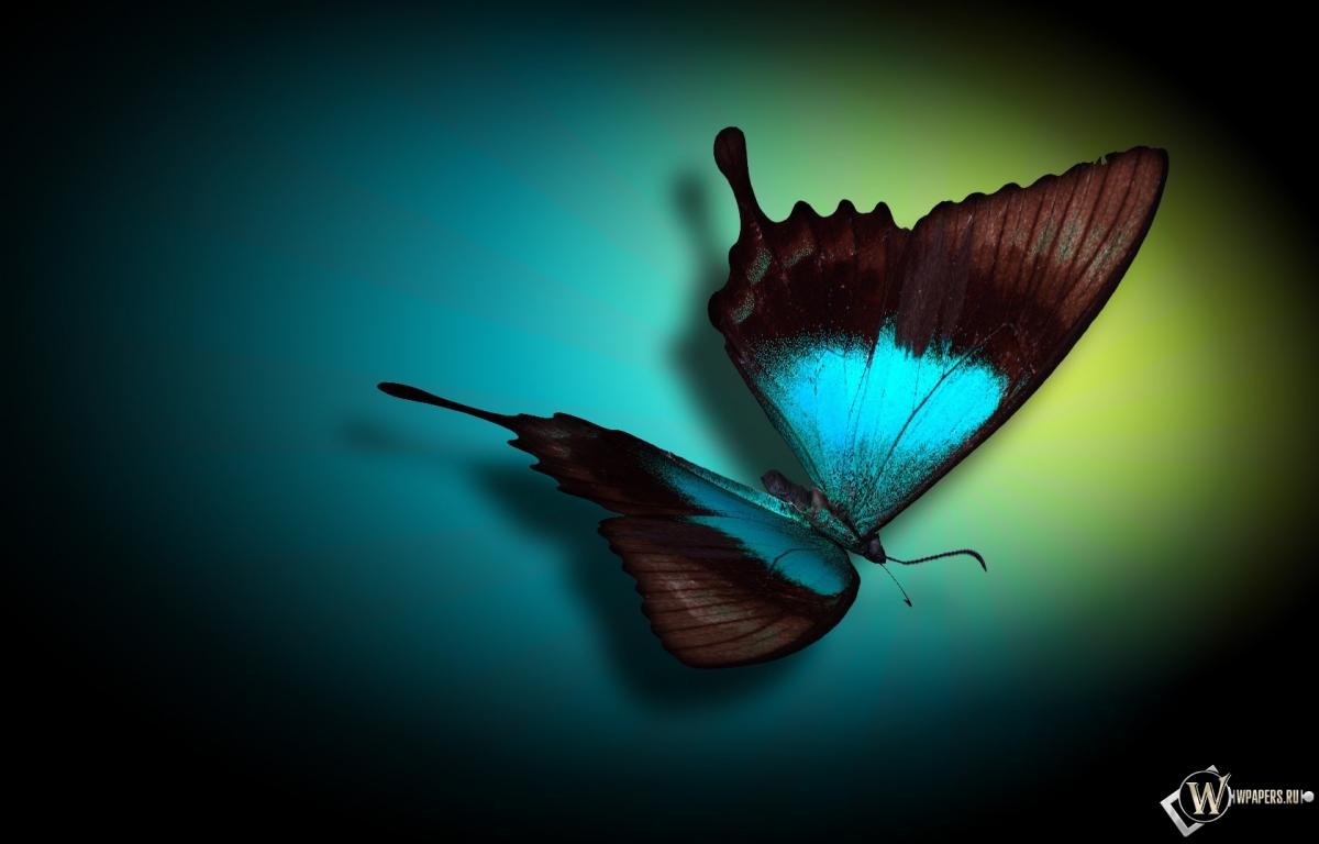 Бабочка 1200x768