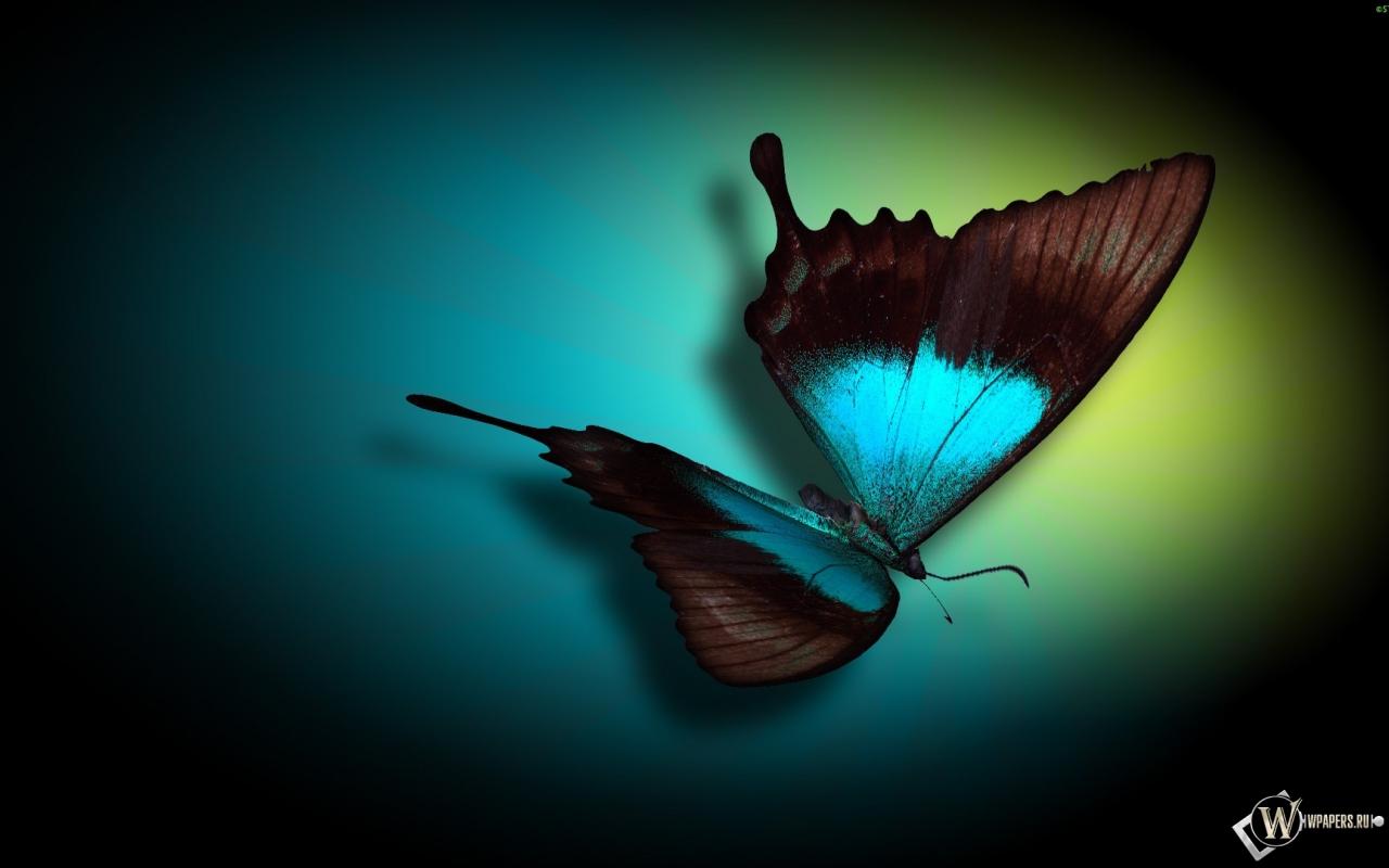 Бабочка 1280x800