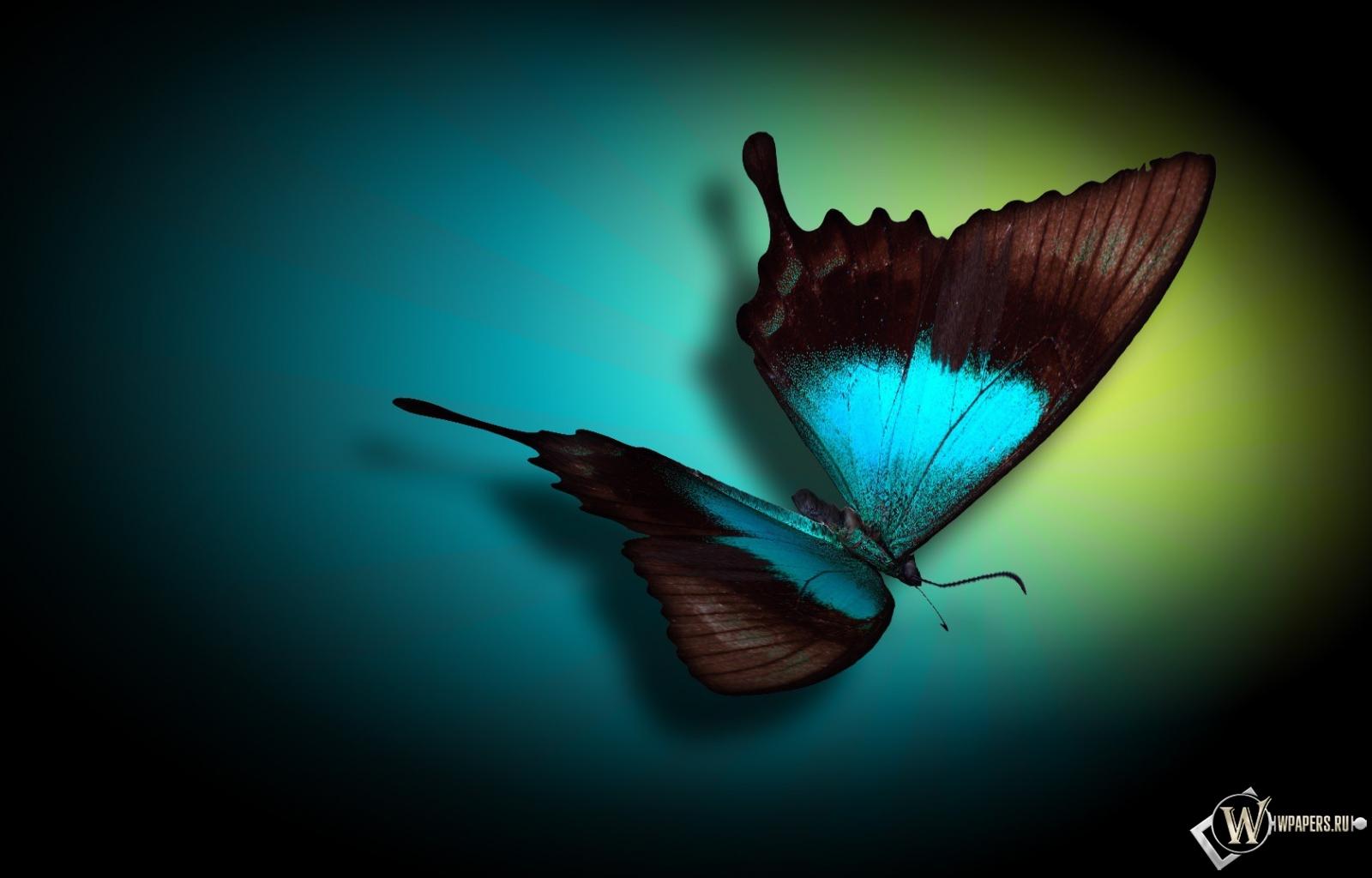 Бабочка 1600x1024