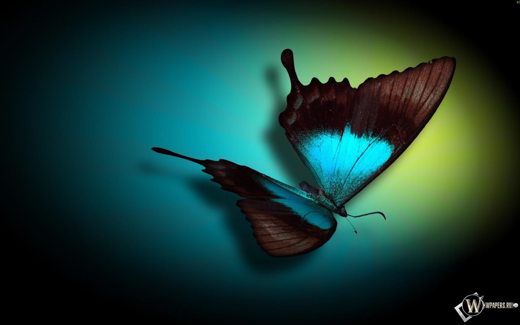 Бабочка 1680x1050