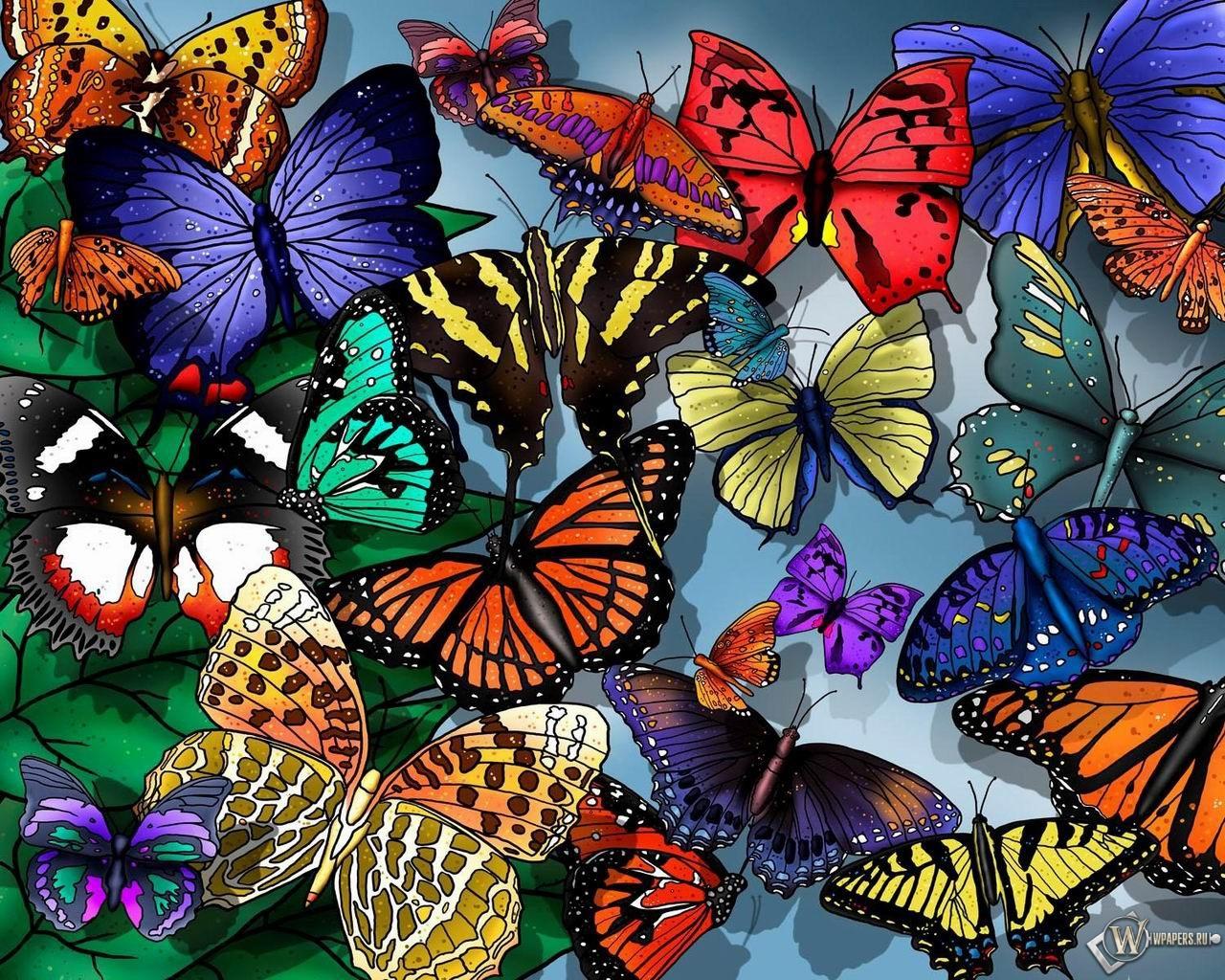 Разноцветные бабочки 1280x1024