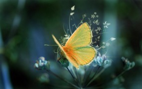 Обои Желтая Бабочка : Вектор, Бабочка, Бабочки