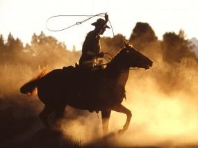 Обои Ковбой на лошади: Ковбой, Лошадь, Мужчина, Мужчины