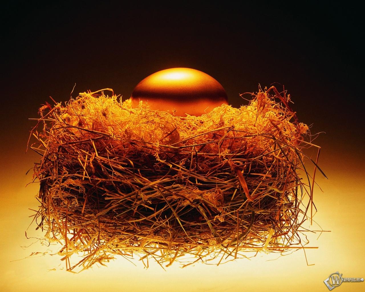 Золотое яйцо в гнезде 1280x1024