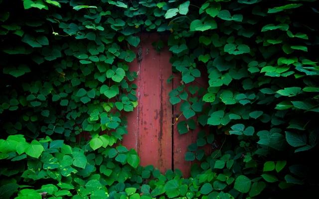 Заросшая дверь