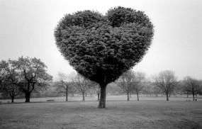 Обои Дерево любви: Любовь, Сердце, Дерево, Настроения