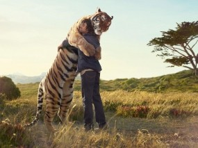 Обнимашки с тигром