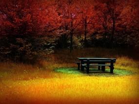 Обои Пустая лавочка: Деревья, Осень, Трава, Цвет, Лавочка, Настроения