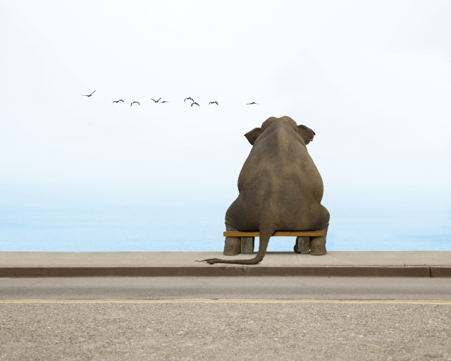 Слон на скамейке