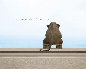 Обои Слон на скамейке: Скамейка, Слон, Чайки, Настроения