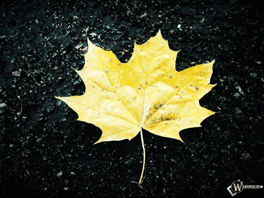 Жёлтый кленовый лист 1024x768