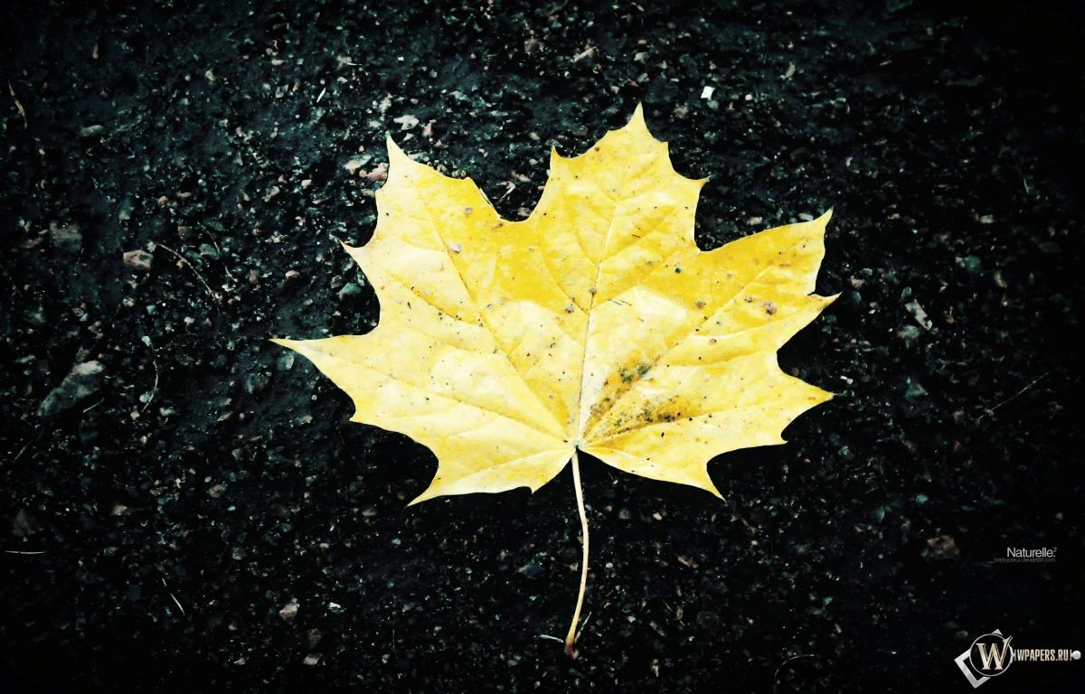 Жёлтый кленовый лист 1200x768