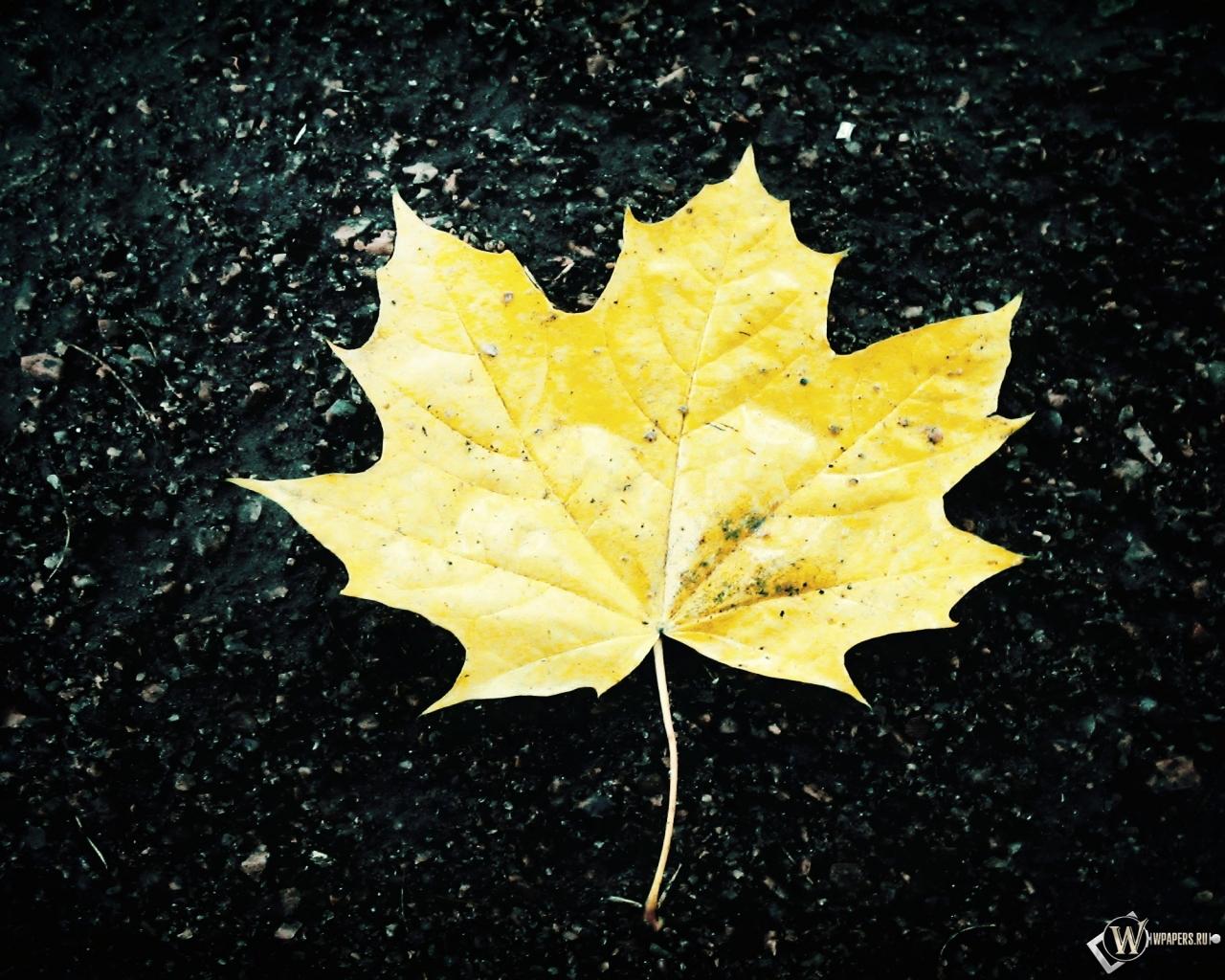 Жёлтый кленовый лист 1280x1024