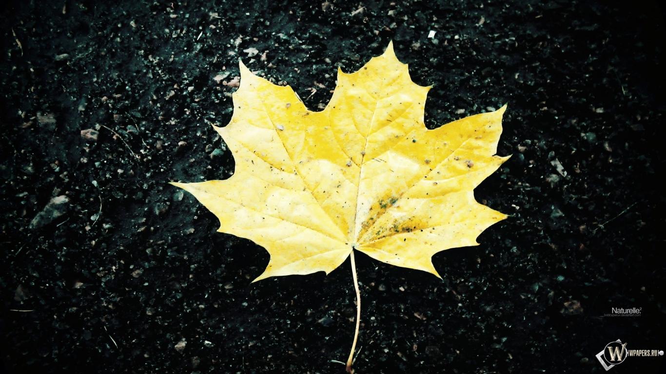 Жёлтый кленовый лист 1366x768