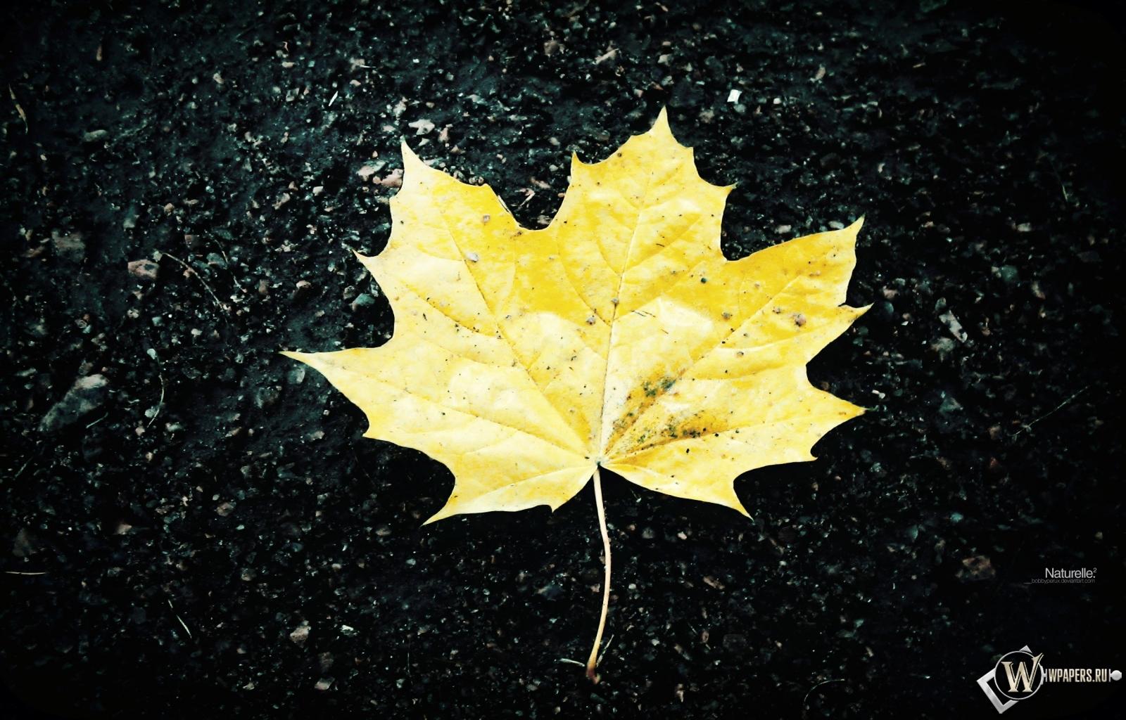Жёлтый кленовый лист 1600x1024