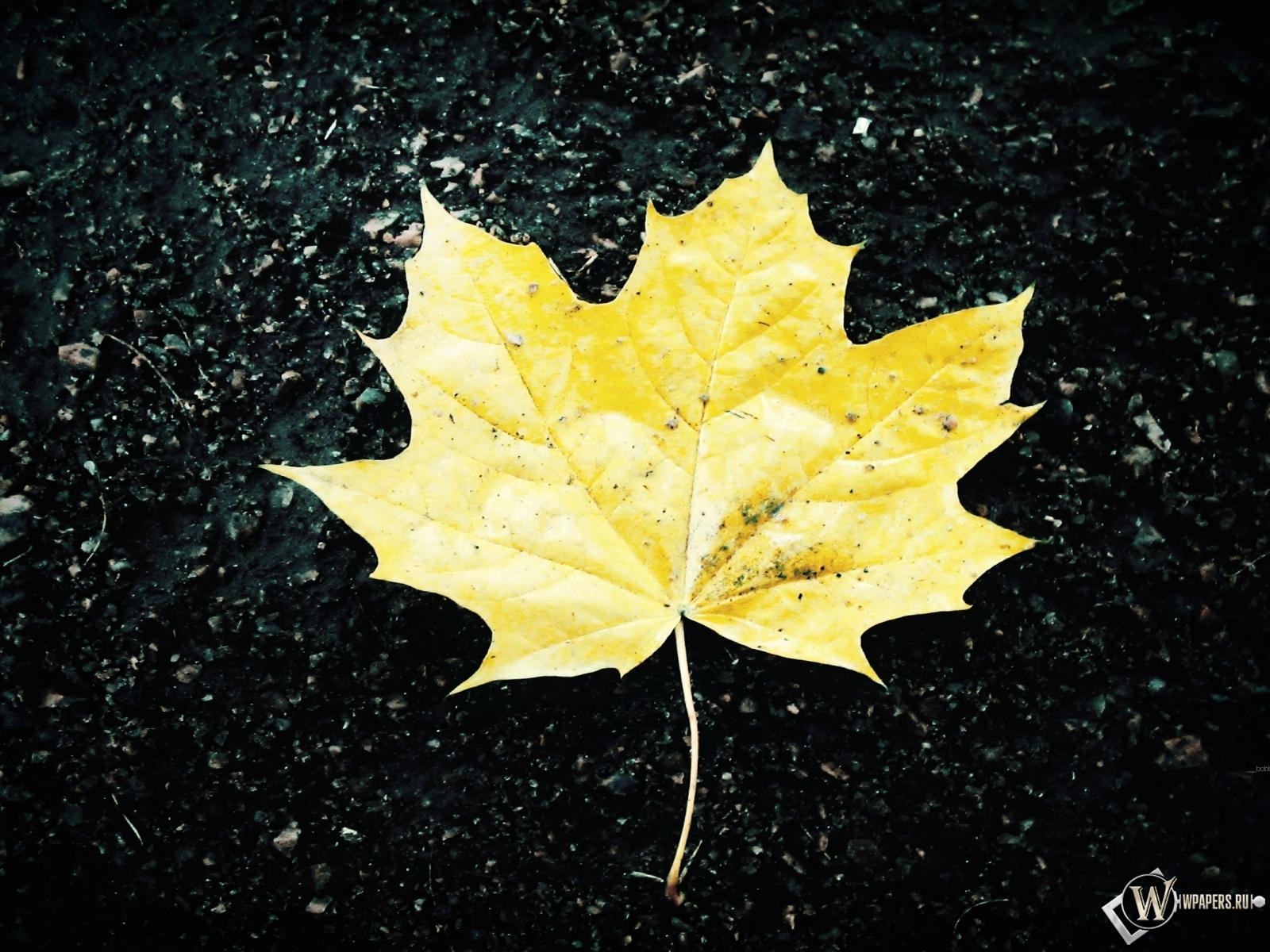 Жёлтый кленовый лист 1600x1200