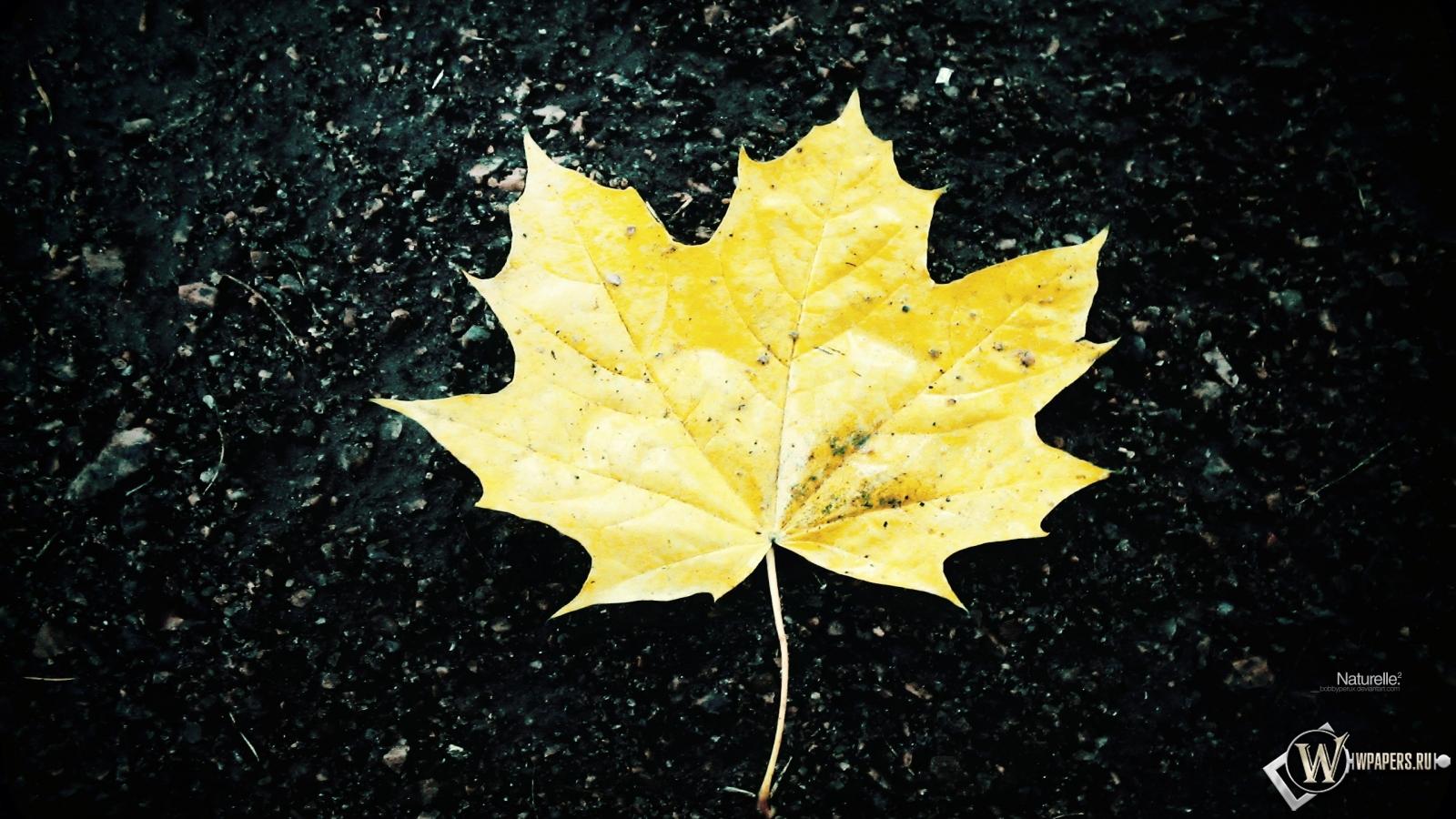 Жёлтый кленовый лист 1600x900
