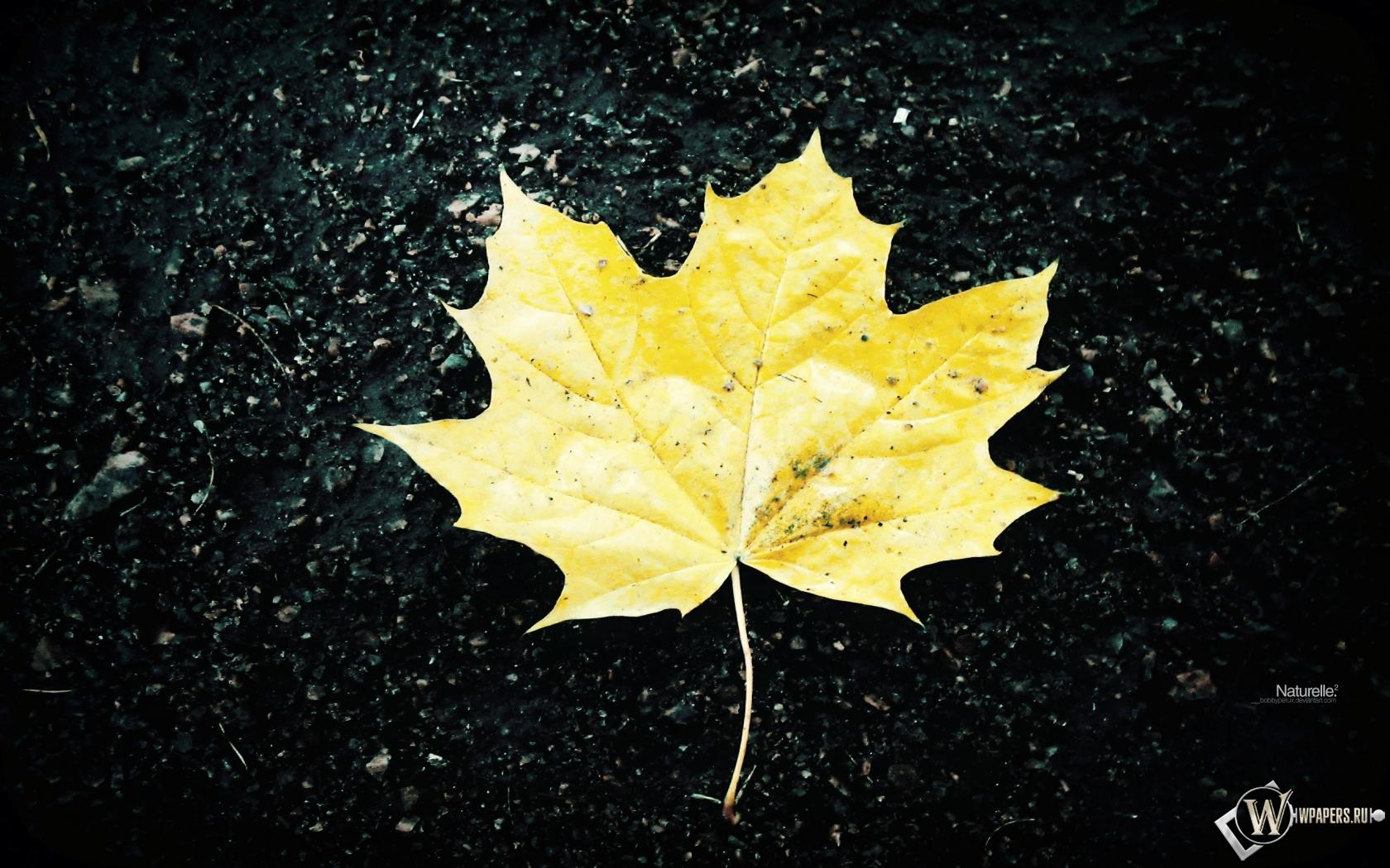 Жёлтый кленовый лист 1680x1050