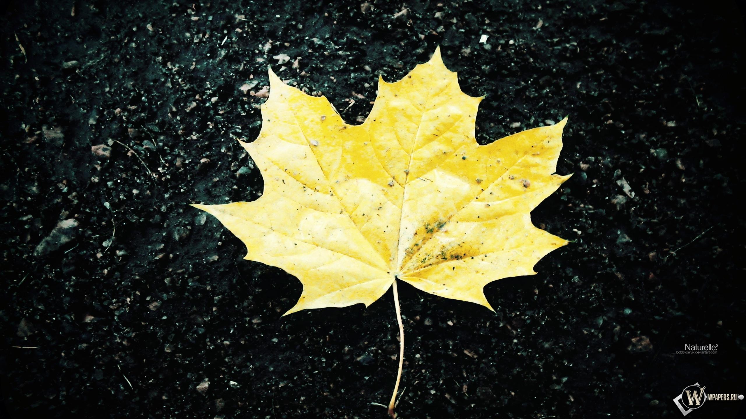 Жёлтый кленовый лист 2560x1440