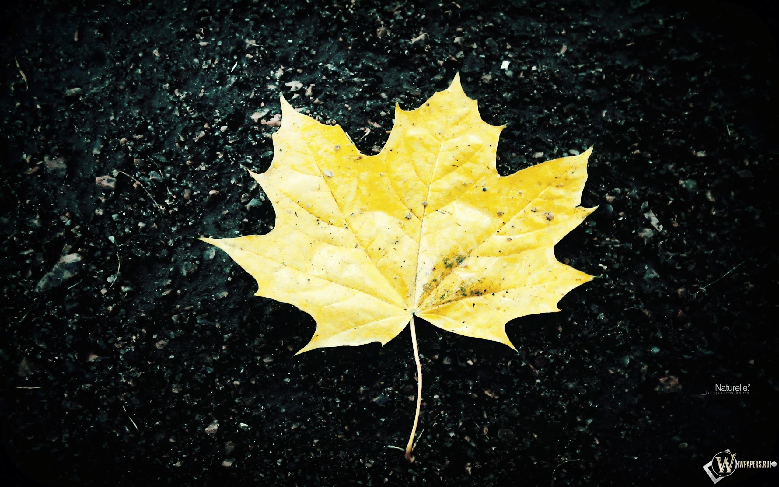 Жёлтый кленовый лист 2560x1600