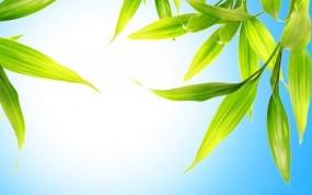 Обои Зелёные листья: Зелень, Небо, Листья, Растения