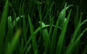 темно-зеленый цвет