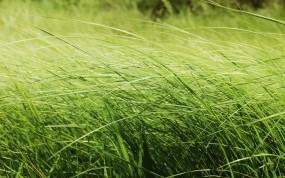 Обои Зелёная трава: Зелень, Трава, Луг, Растения