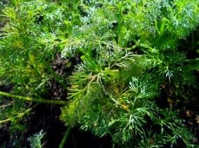 Обои Росяная трава: Зелень, Капли, Роса, Трава, Лето, Растения