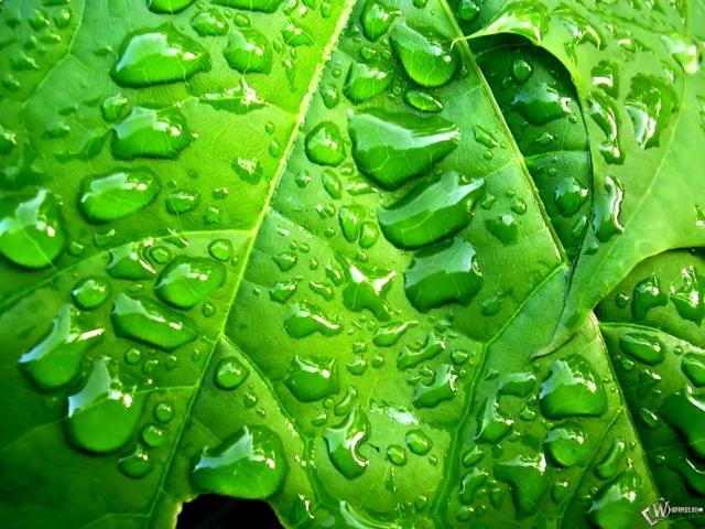 Лист в капельках дождя