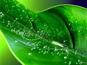 травяной цвет