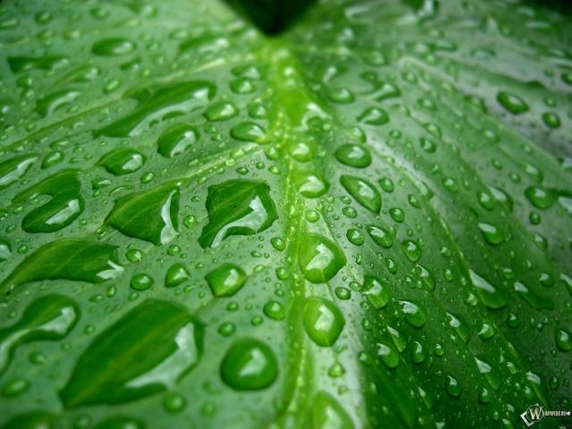 Капельки дождя на большом листе