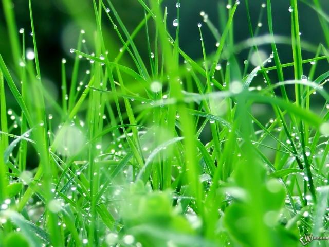 Капельки дождя на траве