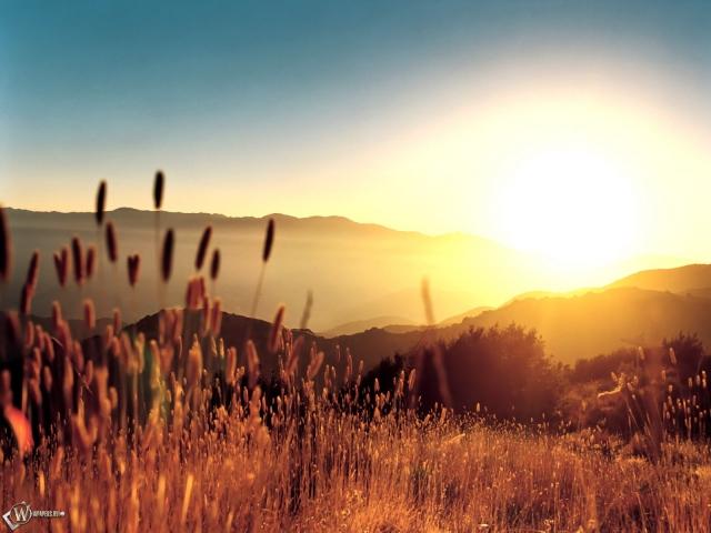 Колосья в лучах солнца