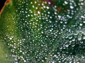 Обои Утренняя роса : Брызги, Капельки, Влага, Мокрый лист, Растения
