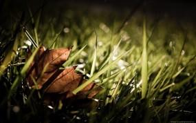 Обои Сухой листок на траве: Осень, Листок, Трава, Растения