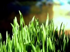 Обои Трава: Трава, Макро, Растения