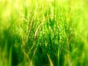 Обои Зелень: Зелень, Трава, Деревья