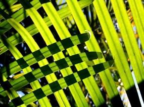 Сетка из длинных листьев