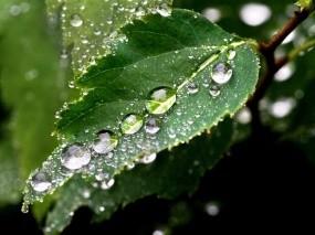 Обои Капли на листе: Капли, Лист, Макро, Растения