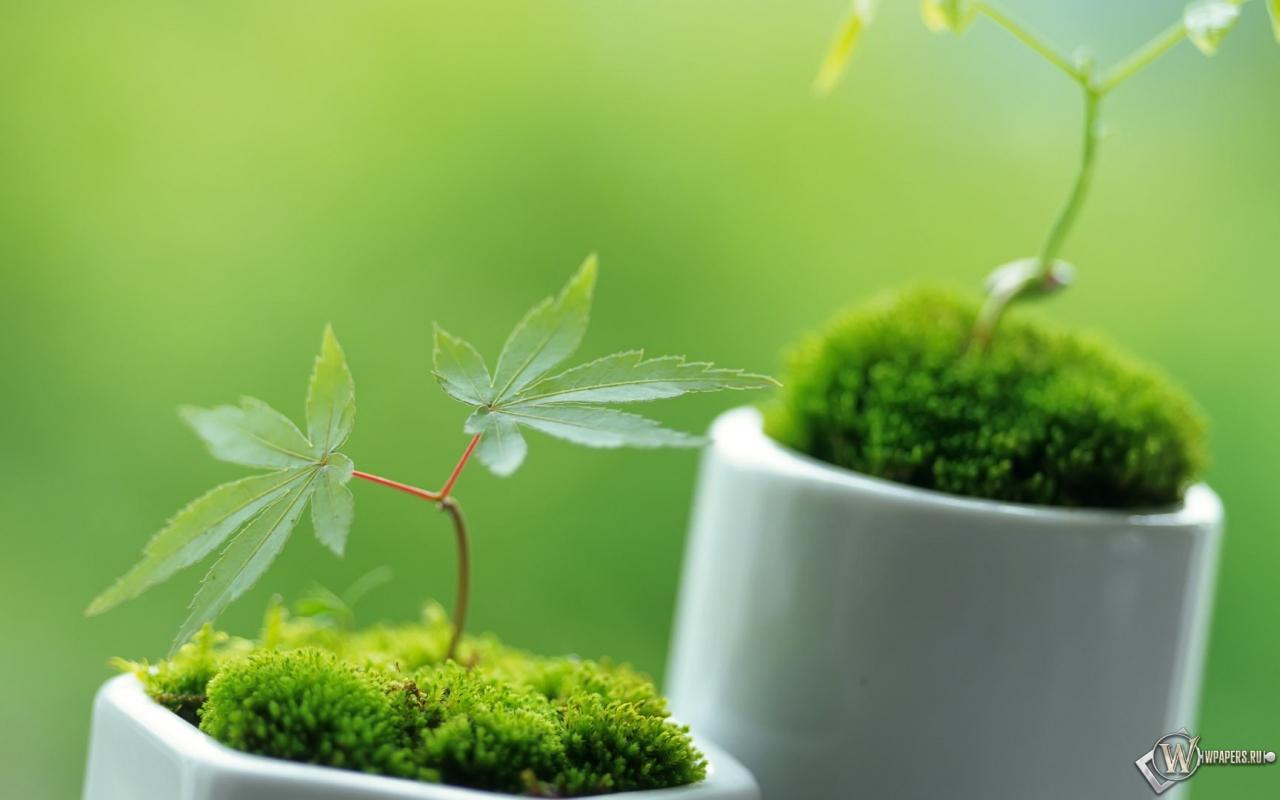 Маленькие декоративные растения 1280x800