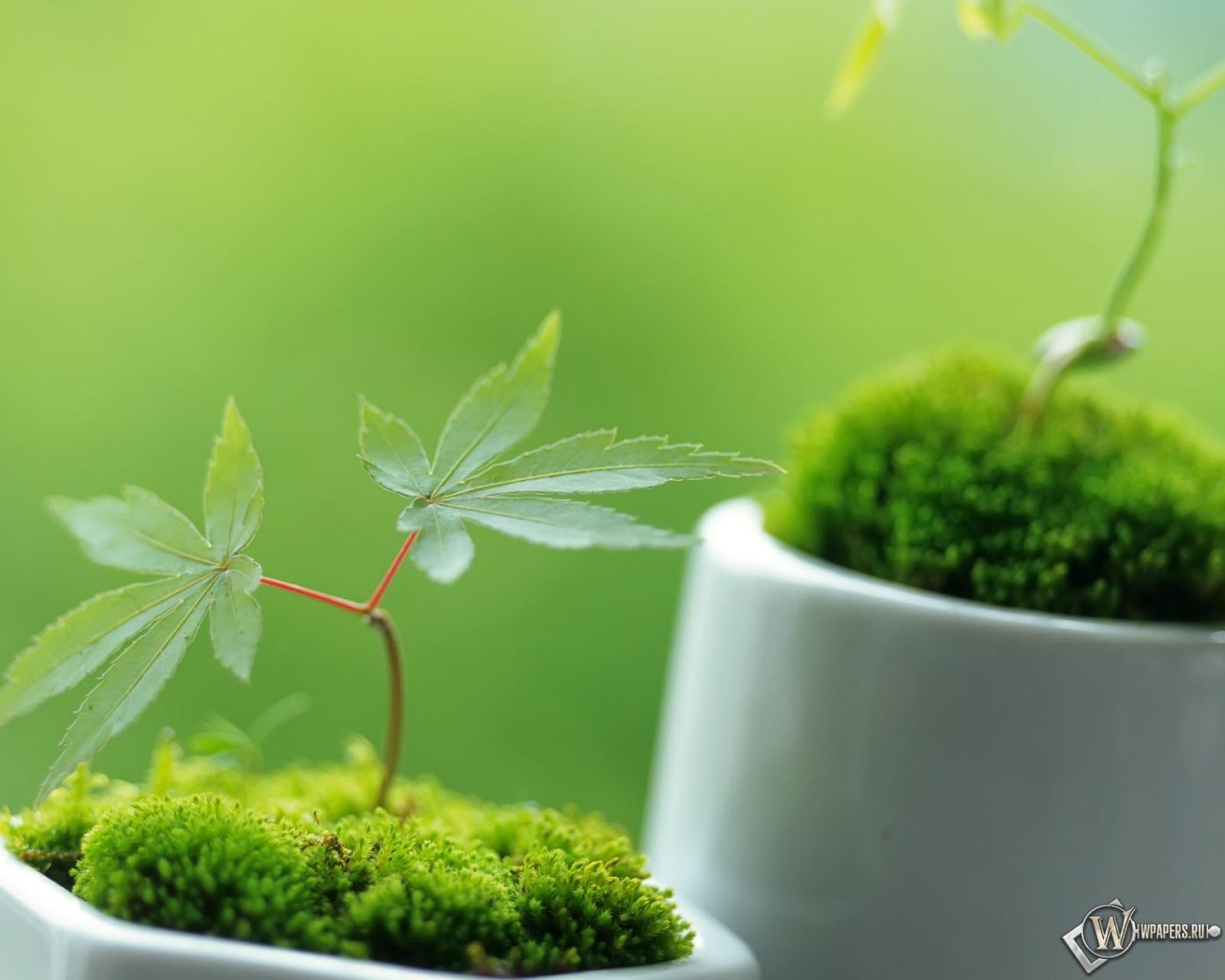 Маленькие декоративные растения 1600x1280