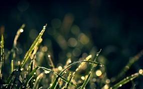 Обои Трава: Капли, Трава, Макро, Растения