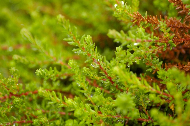Мокрый мох