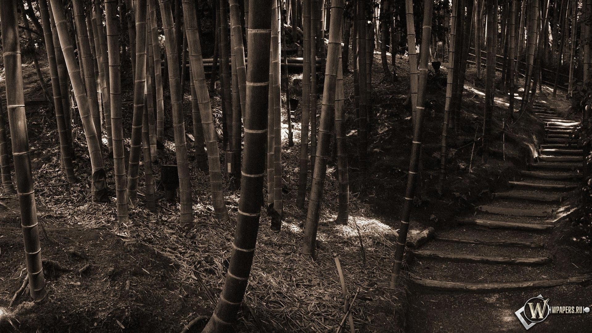 Обои бамбуковый лес на рабочий стол