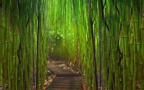 Обои Бамбуковый лес Киото Япония: Заросли, Япония, Бамбук, Тропинка, Бамбук