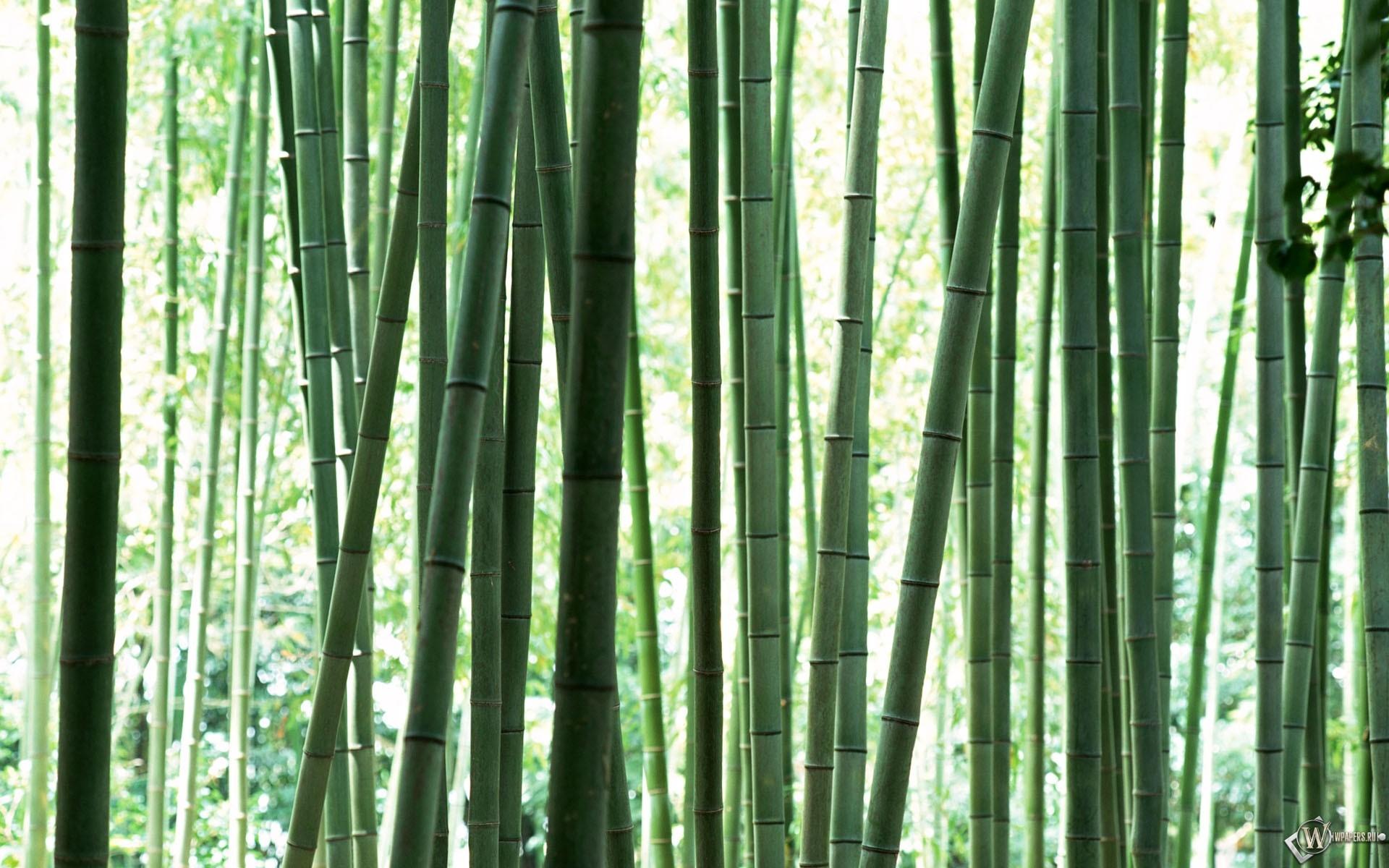 Стебли бамбука 1920x1200